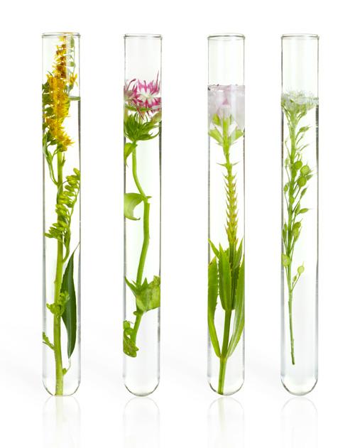 Les actifs des plantes par Prescription Nature